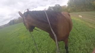 gallop full speed