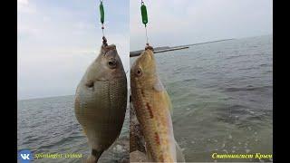 Морская рыбалка Отлично порыбачил на булеры
