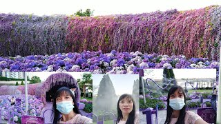 Beautiful Purple Flower Galore…