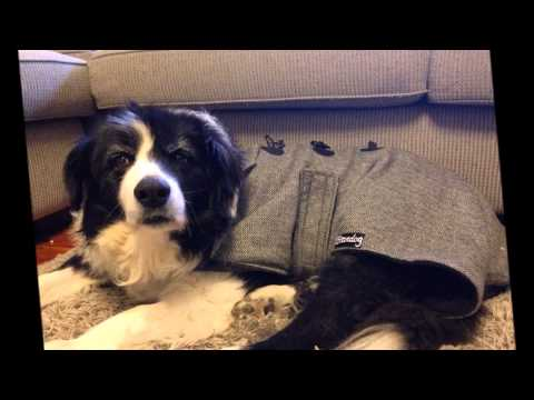 Saying Goodbye To My Dog | RIP Brando My Beautiful Border Collie 30/9/2014
