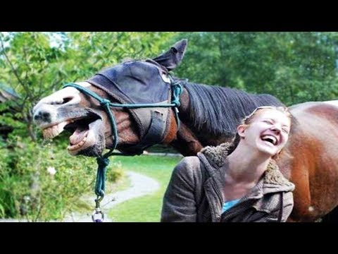 Funniest Animals  - Funny Domestic And Wild Animals' LifeT  - Cutest Animals Ever