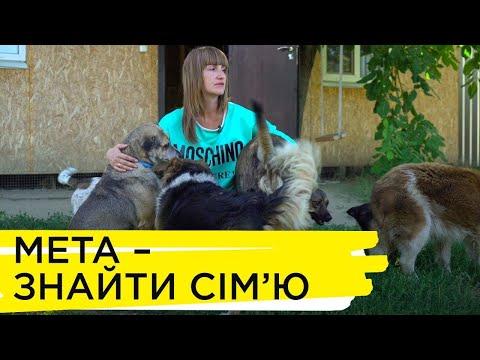 Суспільне Кропивницький: лайф стори Марина Калачова, створила міні притулок для собак вр 3 00