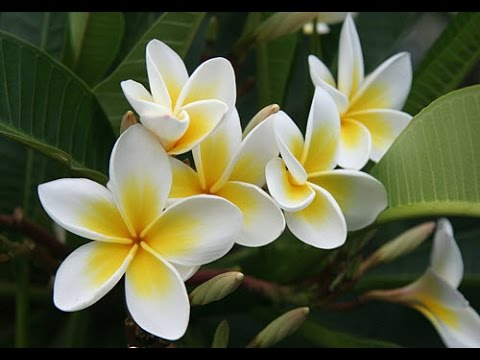 Top 10 Best smelling House Plants