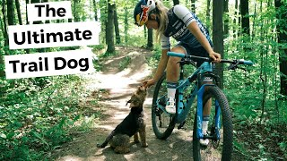 The Ultimate Mountain Bike Trail Dog | Buddy the Welsh Terrier