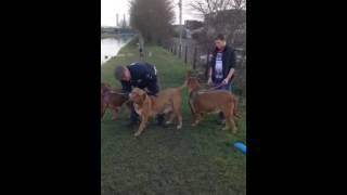 Dogue De Bordeaux Our Dogues 3 Generations