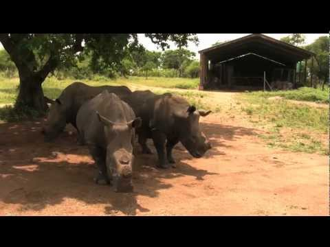 White Rhino, Safari Guide, South Africa - GoHop.ie - Unravel Travel TV