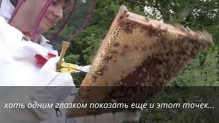 Французские каникулы и пчелы