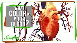 Gambar cover What Color is Your Blood?