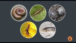 Facts About Bugs & Insects: Pest Control Guide for Homeowners & Tenants