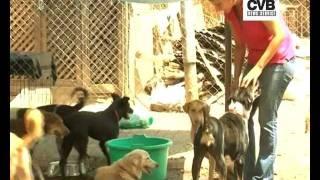 NGO ADOPTS ORPHANED PET DOGS