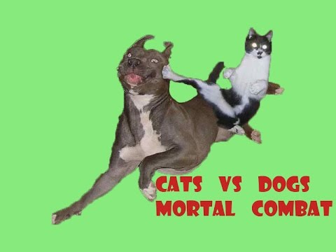 Funny cat video - Cats vs dogs. Mortal Combat.