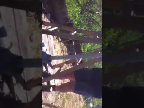 Busenje Bunara Drilling Rig Bohrbrunnen 1 Youtube