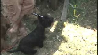 How To Make A Rabbit Hutch