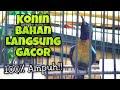 Pancingan Konin Gacor Full Tembakan Tajam Dan Nyaring Bikin Konin Bahan Cepat Ikut Bunyi  Mp3 - Mp4 Download
