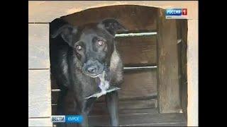 Вести-Курск. «Все псы попадают в…»: что ждет бездомных животных с курских улиц - Вести 24