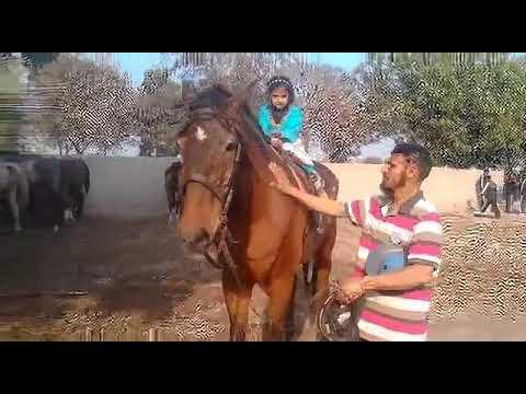 Sadiq public school bwp riding instr asmatullah bandial