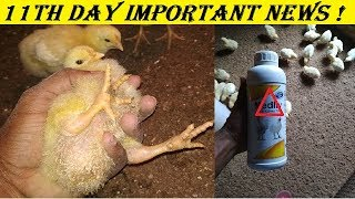 11th day ! poultry training ! important news ! abhishek singh