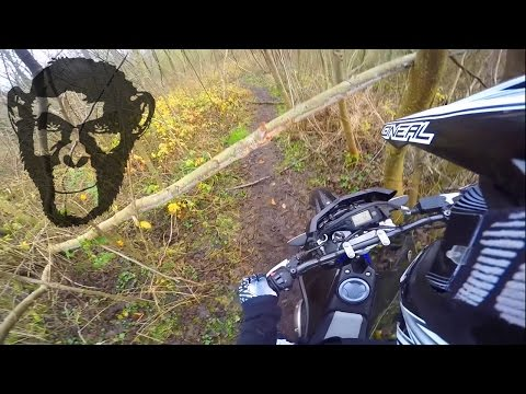 Daily Offroad Shit | Winter without snow | Forest | Fail | WR 125 R |