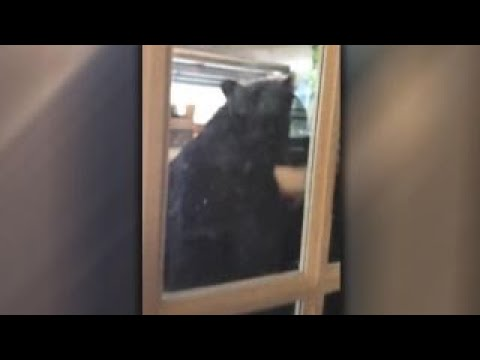 bear-gives-homeowner-quite-a-scare-in-florida