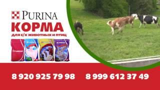 Промо ролик корма Purina® от официального дилера