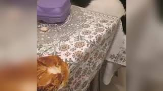 Очень наглый кот!!