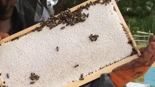 Такая красивая рамка с мёдом - мечта любого пчеловода!