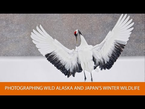 Photographing Wild Alaska and Japan's Winter Wildlife, with Robert O'Toole