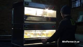 видео Фазаны - виды, содержание и уход, необходимое оборудование