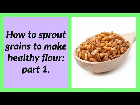 sprouted-grains-basics