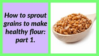 Sprouted Grains Basics