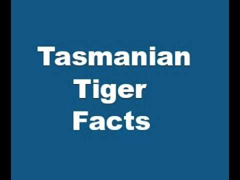 Tasmanian Tiger Facts - Facts About Tasmanian Tigers - YouTube