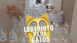 OTRO CANAL DE GATOS | Hizo un laberinto para sus gatos