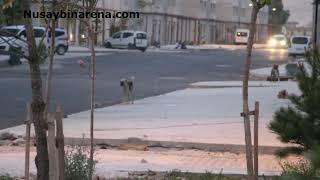 Nusaybin Toki konutları sokakları köpekler basmış!