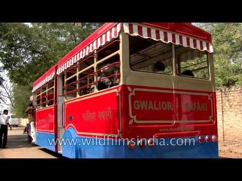 Gwalior Safari on multi seater auto rickshaw