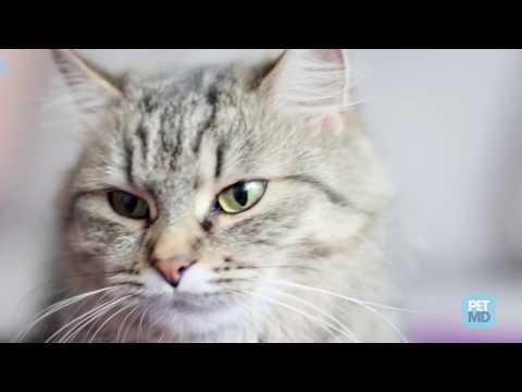 mačička tuku
