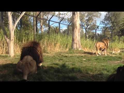 Melbourne Zoo in Australia