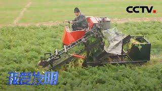 《我爱发明》 20210101 胡萝卜收获机|CCTV农业 - YouTube