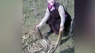 Дагестанская пенсионерка убила лопатой около сотни змей в своем огороде