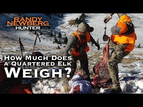 How Much Does A Quartered Elk Really Weigh?