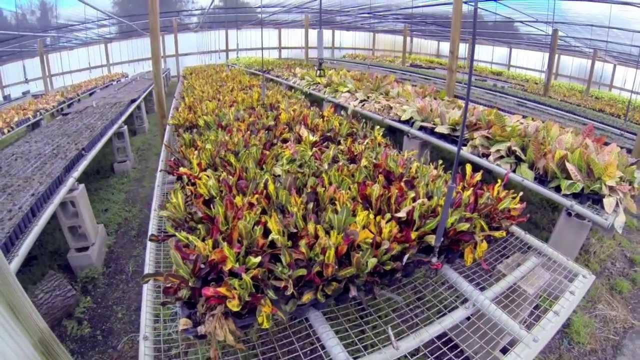 Plant Nursery Orlando - (407) 378-5126 - Landscaping Orlando - Sod ...