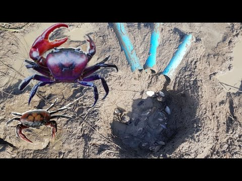 Primitive Technology-Awesome! Cute Man Deep Hole Crab&Fish  Trap Using 3 PVC Pipes To Catch Crab #11