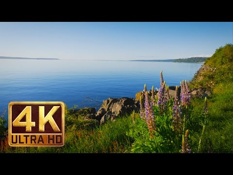 4K Video Nature Sounds for Relaxation & Meditation - DISCOVERY PARK - Seattle (PART 2 - 1.5 HOURS)