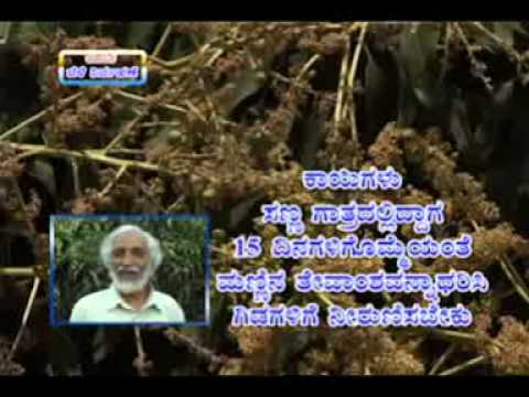 11 12 2014 mango crop management dr s v hittalamani and self experience in integrated farming by mr