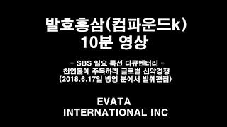 발효홍삼 컴파운드k SBS 다큐