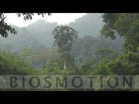 Biosmotion - Amazing Indonesian Wildlife - showreel Alain Compost
