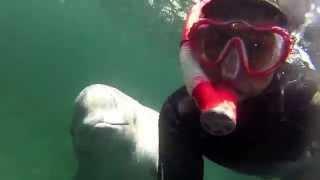 Beluga Encounter