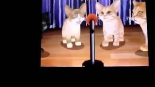 Purr Pals - Wii - Songs - La Habanera