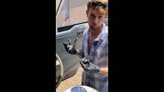 Daniel Mechanics on the Purrfect Bus Life - Front Door