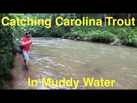 How To Catch South Carolina Trout In Muddy Water