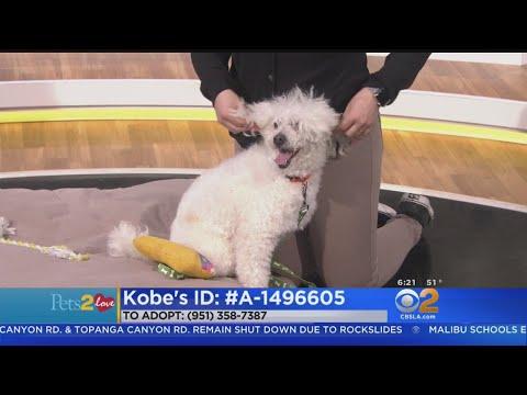 Pets2Love: Kobe